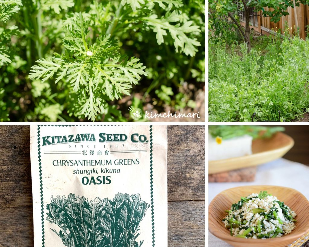 2 pics of chrysanthemum greens growing in my vegetable garden, a seed packet and tofu dish made with ssukat