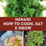 what is minari how to eat and grow